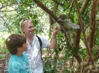 Экскурсия в национальный парк Josani Forest, красная обезьяна Колобус