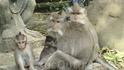 В обезьяньем лесу