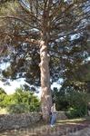 Интересно сколько лет этому дереву?