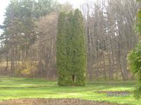 Долина роз. Тройное дерево: там можно спрятаться