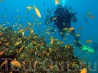 Подводная магия кораллового пляжа Эйлата