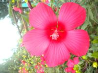 чудесные цветы. они повсюду приятно радуют глаз