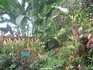 Канарские острова. Тенерифе. Музей бабочек