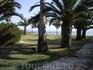 Еще одно фото пальмового сада
