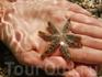 """""""Звезда в звезде"""" - это чудесное создание принесла мне дочь."""