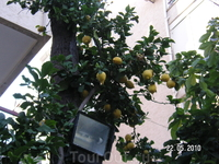 ...и лимоны там же