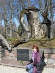 Памятник Турайдской Розе