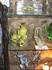 Напротив замка есть сувенирные лавки, в одной из них продаются вот такие милые царевны или царевичи-лягушки.