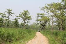 Читван. Поездка по джунглям на джипах, продолжительность 3 часа. Нам показалась утомительной