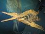 Что-то водное и хищное... времен динозавров