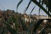 Вид на мусульманский квартал от Лионских ворот
