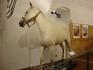 Белый конь маэстро Дали в замке Гала