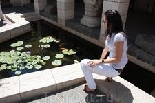Табха-храм умножения хлебов и рыб