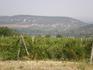 Виноградники по пути к Мангупу