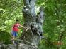 Леший на дереве