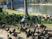 The Fairmount Park, Riverside, Ca.