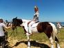 Красивая ухоженная спортивная лошадь.Только для фото!