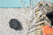 кусок лечебной грязи и веточка просоленная в озере. Все это  лежит  на кристалах соли  которое устилает  всех дно и берег озера