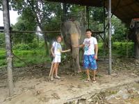 Все тот же слоник