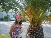 """Такие """"ананасы"""" растут в Алании вдоль дороги"""