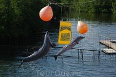 дельфинарий Сьенфуегоса