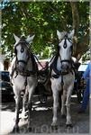 эворийские кони!
