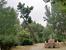 Этот фонтанчик с питьевой водой, построенный в 1933 году, находится возле второго озера, поменьше. Озеро называется Lago de Patinaje, оно замерзает и на нем катаются на коньках. А фонтанчик называется