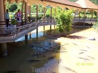 крокодиловая ферма, ловля на живца