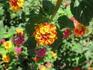 Цветущая Алания