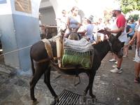 ослик-такси
