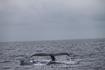 февраль-март размножаются киты