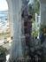 Марбелья. Порт Банус. Местная святая Кармен, покровительница моряков