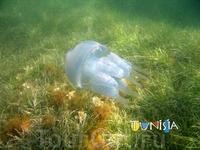 Медуза.