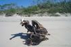 Море выбрасывает на берег причудливые коряги.