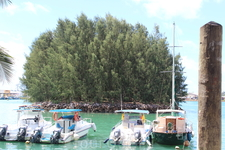 Вот такие деревья специально высаживают на кораллах. Когда они достигают нужных размеров их спиливают и получается фундамент для строительства зданий