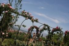 Девушки хорошо монтируются в цветочные арки Хенералифе