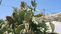 растительный мир острова