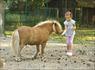 Это хорошо когда лошадка одна...а когда почуяв корм их несётся штук десять?