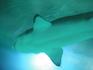 Конечно самый интересный - это аквариум с акулами