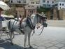 лошадка для туристов