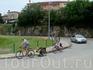 собака на велопрогулке :))
