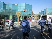 эстафета олимпийского огня в Сочи
