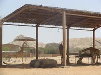 Зоопарк в г.Аль-Айн
