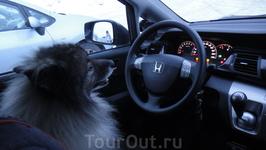 наш водитель