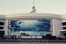 А это сам океанариум