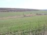 Это поля засеянные озимой пшеницей.
