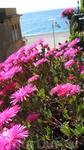 Каждый балкон украшен такими цветочками