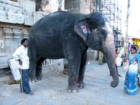 слон у Вирупакша