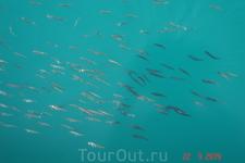 Рыбешки в море.