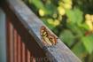 бабочки везде огромных размеров и совершенно фантастических окрасов